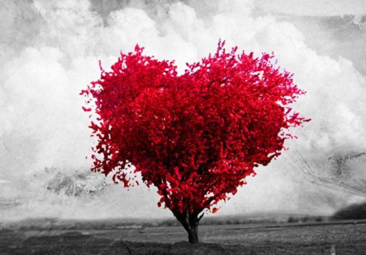 Prava Ljubav