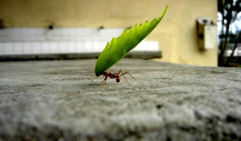MravOtkaz